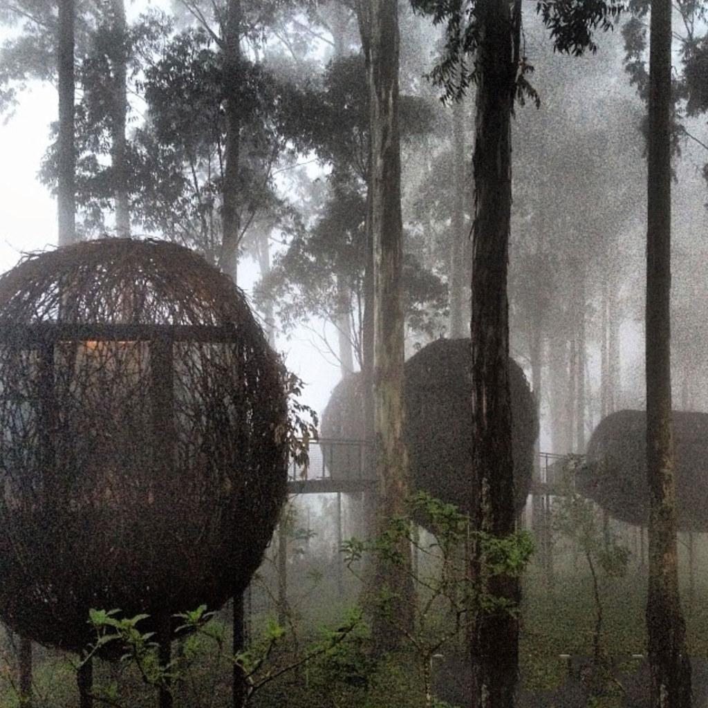 6-dusun-bambu-bird-nest-via-saicis