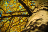 From Beneath the Aspen by Derek Cronk