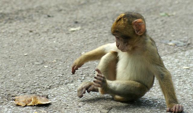 Just monkey-ing around