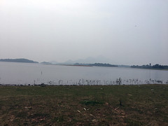 Kava[Palakkad, Kerala,India]