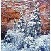 Frosty Cloak by Justin Lowery