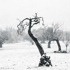 Petit arbret i sa neu