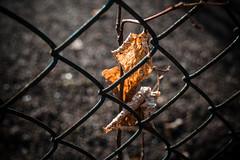 Zaungeflüster