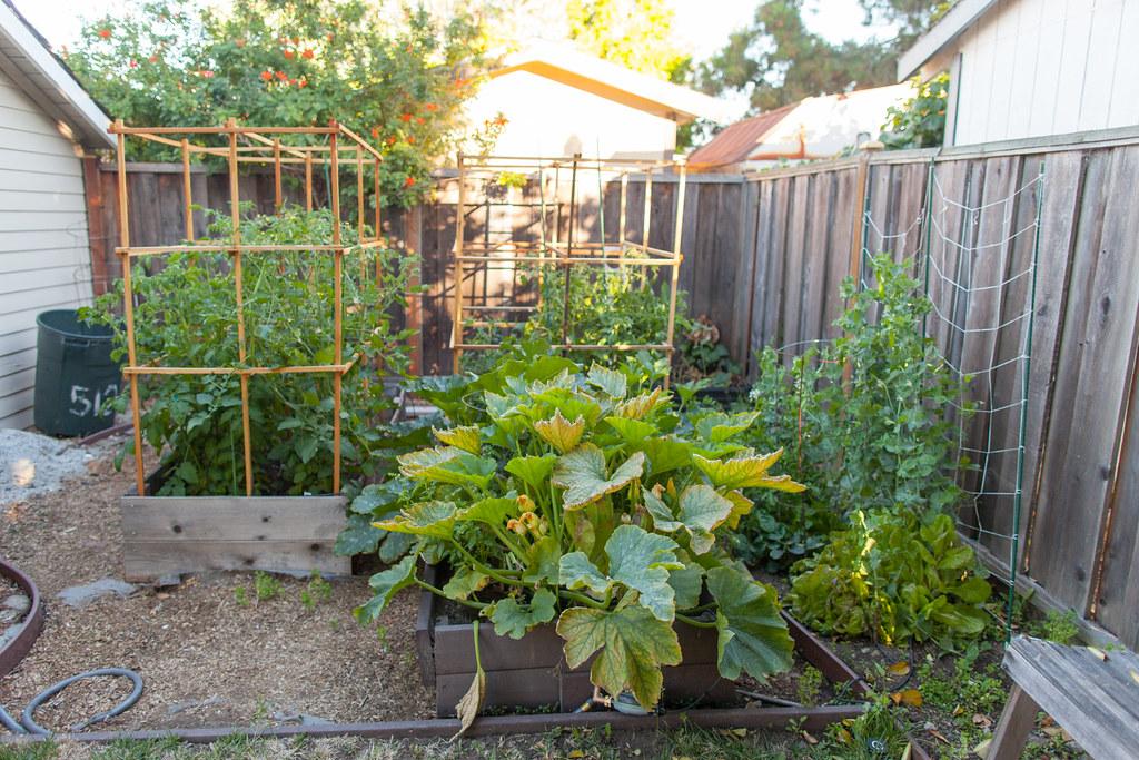 Our Californian Garden