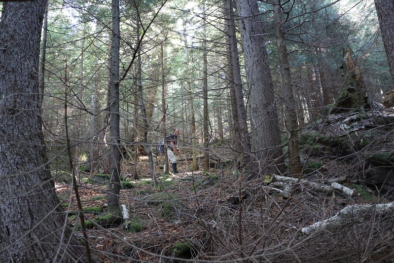Bushwhacking through the pines on Friday Mountain - dead branches in your face