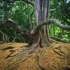 Creepy #newsteadabbey tree.