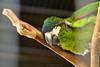 Bali Bird Park_268 by Mirna Rizka