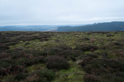 From the Mynd
