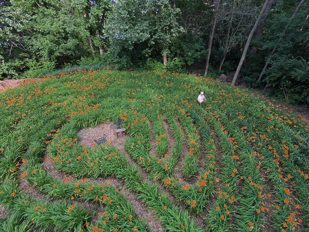 Walking along the Daylily Labyrinth Pathway