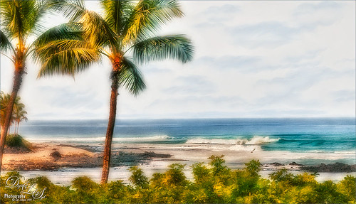 Image of palm trees and the ocean in Hawaii