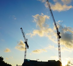 DC Dance of the Cranes 59058