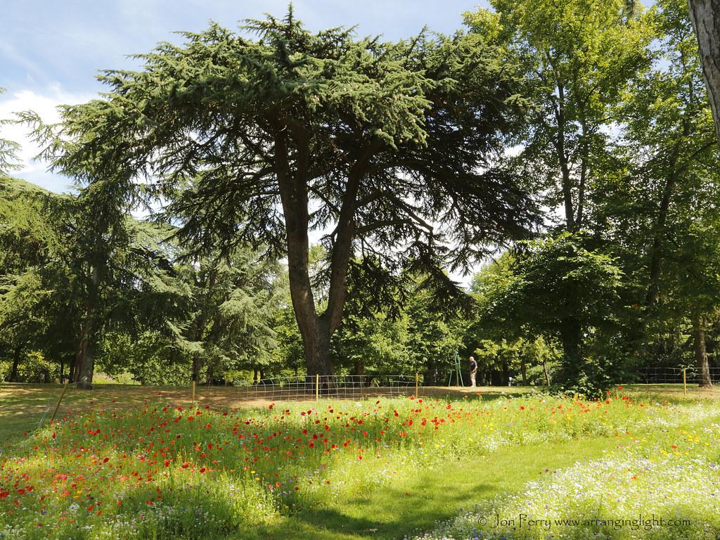 _C0A4347REW Paint a Meadow, Jon Perry - Enlightenshade, 2-8-15 zan
