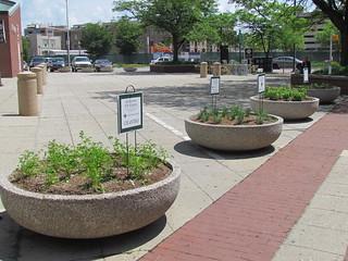 Herb garden at City Market