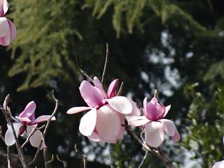 Asolo sein Lächeln schmeichelt den Blüten 02229