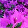 #flower #flowers #floral #flowerporn #flowersofinstagram #rsa_nature #love_natura #nature_obsession_flowers #nature_shooters #nature_captures #ig_collection_flowers #ig_flowers #flowerstagram #flower_daily #macro #macromood #macros #macro_perfection #macr