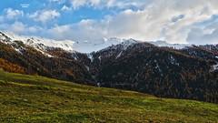 Verrey - Valais - Suisse