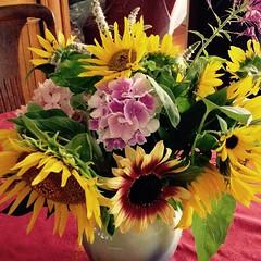 #growyourown #flowers #sunflower #garden #gardening #gardenerbrag #gardeningnerd