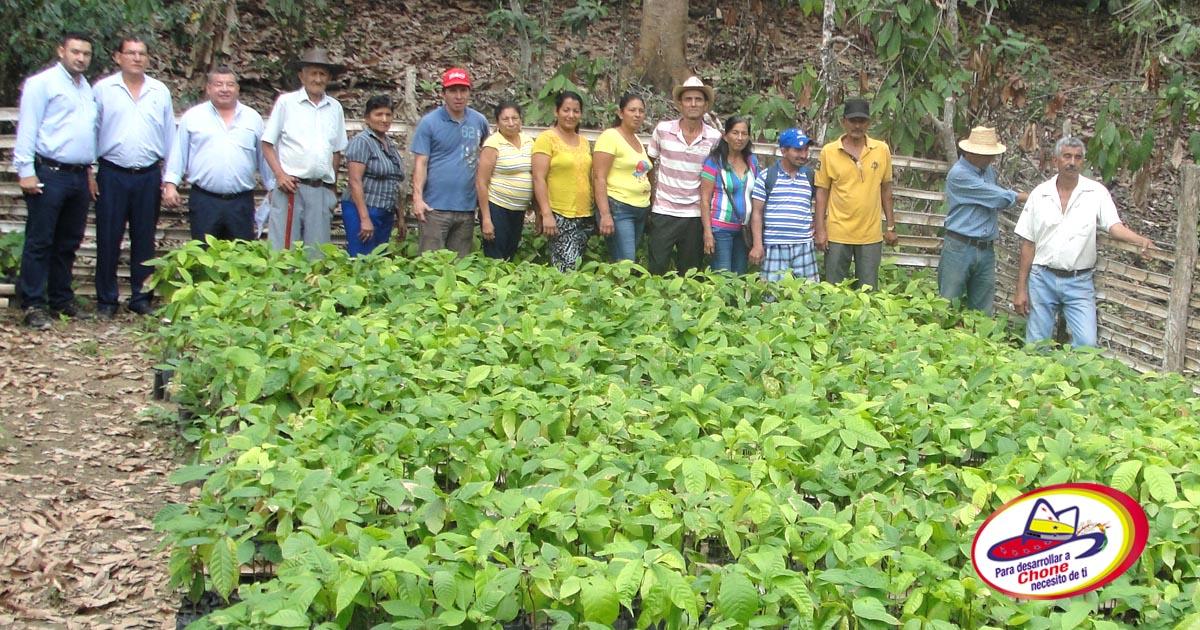 Los viveros tienen listas 240 mil plantas de cacao