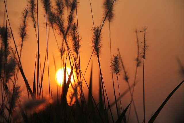 Beautiful Sunset, Canon EOS 1100D, Canon EF-S 18-135mm f/3.5-5.6 IS