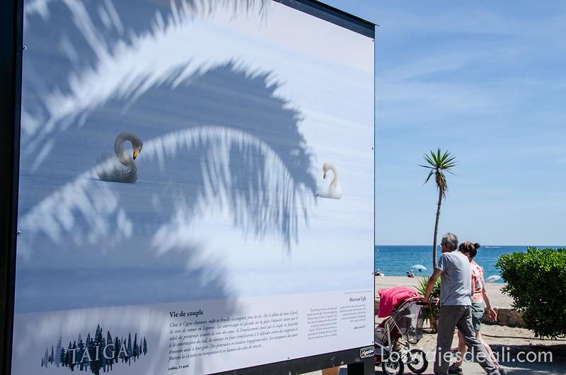 exposición de Jim Brandenburg en argeles sur mer y Paulilles
