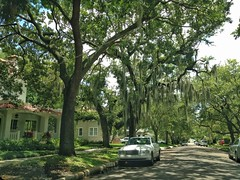 Hyde Park, Tampa, FL