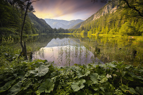 summer lake alps reflection nature water austria mr goldenhour aflenz softlight mirrorreflection aflenzerstaritzen
