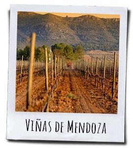 De wijngaarden van Bodegas Mendoza in Villena