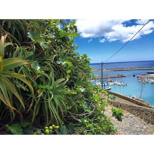 """Острова в Океане. """"Весь покрытый зеленью, абсолютно весь"""" - это про Азорские острова. Склоны со стороны океана покрыты Алоэ, диким инжиром, подсолнухами и еще много чем.  Santa Maria.  #Azores #Atlantic #yachtschool #sailing #sailingschool #yacht #yachtin"""