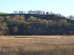 Reeds and rookery