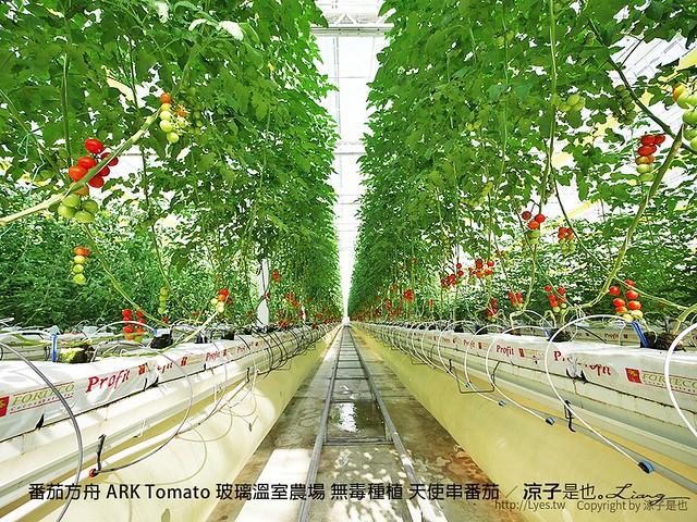 番茄方舟 ARK Tomato 玻璃溫室農場 無毒種植 天使串番茄 14