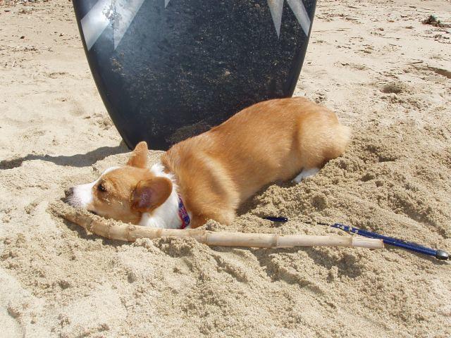 Beach 043