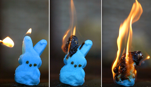 bunny peeps in peril #8