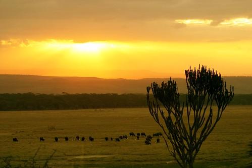 sunset landscape kenya lakenakuru