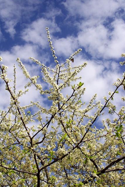 Spring Perches
