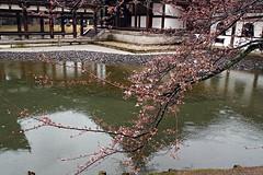 Pacific Theme - Kyoto, Japan