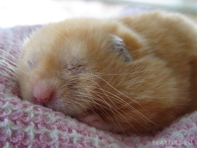 Whiskers! *Kumanoko*, Sony DSC-F88