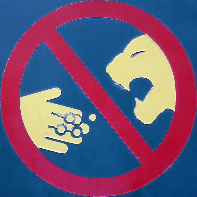 Do not feed the Thundercats