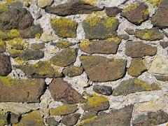 Good lichen action