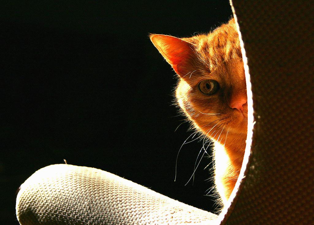 От кота пахнет уксусом