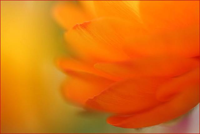i dream in orange