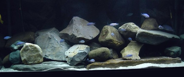 Aquarium and fish care african cichlid aquarium basic for African cichlid rock decoration