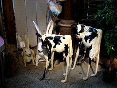 cattle-like mammal, dairy, mammal, dairy cow, cattle,