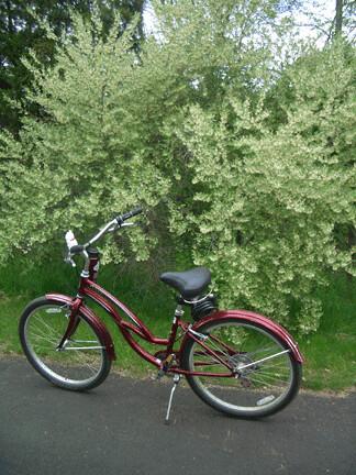 bicycle arb