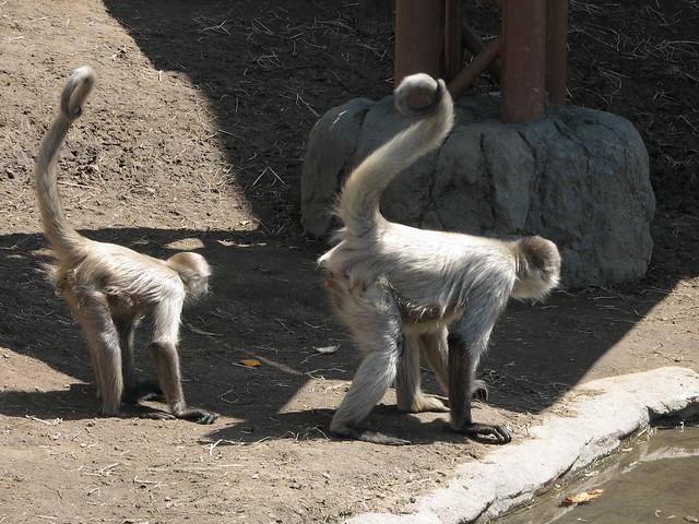 Asahiyama zoo, Asahikawa, Japan  Flickr - Photo Sharing!