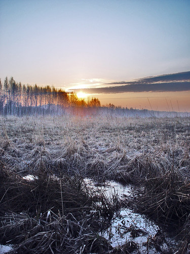 wood morning trees sky cloud sun mist cold tree nature water beautiful field misty fog clouds forest sunrise espoo suomi finland landscape rising frozen spring still woods skies silent silence fields plains rise hush plain forests scenicsnotjustlandscapes
