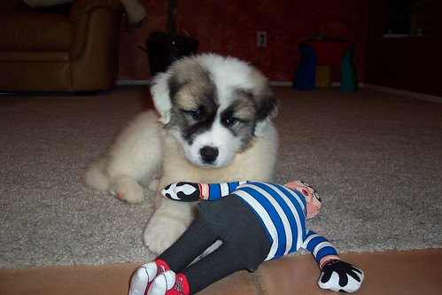 Asher as a puppy
