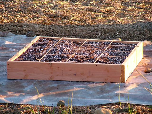 Sqaure Foot Gardening Flickr Photo Sharing