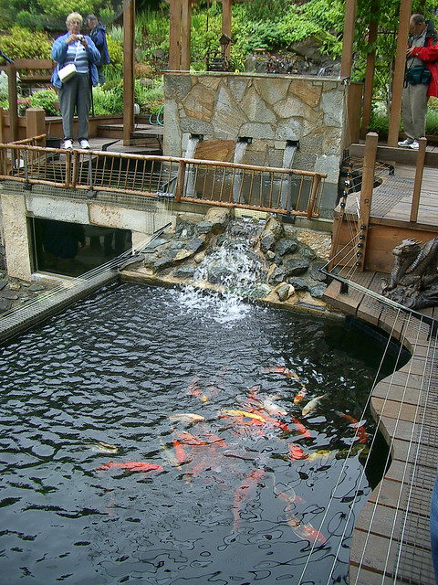 Koi definition meaning for Koi ponds near me