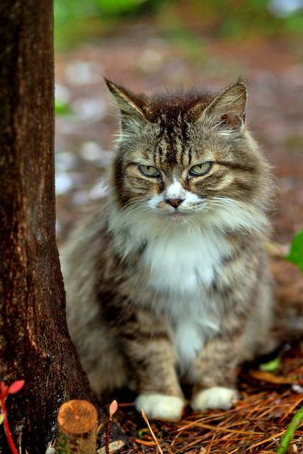 stray cat | stray cat wailed in the rain.. | Tam Tam | Flickr
