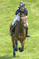 animal sports, equestrianism, english riding, racing, eventing, mare, stallion, equestrian sport, sports, endurance riding, horse, jockey,